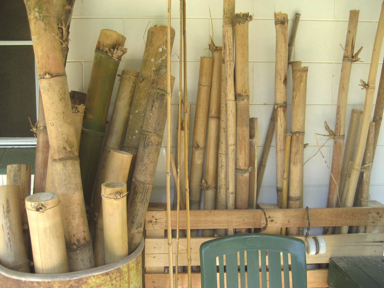 Storing and curing the culms