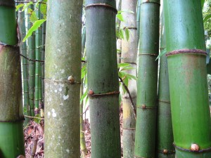 bamboo, phytoremediation, industrial waste, wastewater