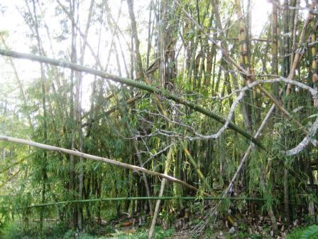 bamboo damage