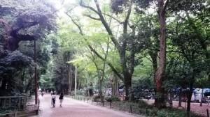 bamboo skirt path1