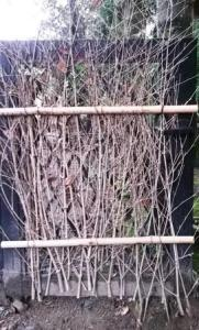 bamboo branch gate