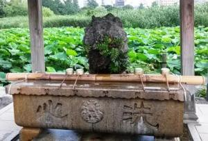 cleansing ritual, bamboo